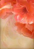 Розовой предпосылка вектора винтажной старой текстурированная бумагой Стоковое Фото