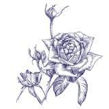 Розовой эскиз llustration вектора ветви нарисованный рукой Стоковые Изображения