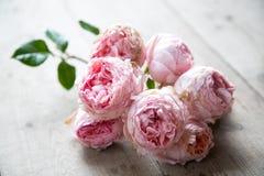 Розовые английские розы на деревянном поле Стоковое Изображение