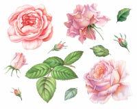 Розовые белые винтажные цветки роз изолированные на белой предпосылке Покрашенная иллюстрация акварели карандаша бесплатная иллюстрация