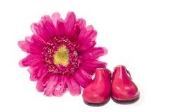 Розовые ботинки и цветок Стоковые Изображения RF