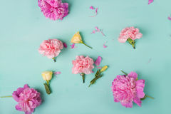 Розовые гвоздики Цветы peonies Розовые пионы на зеленой предпосылке Стоковое Фото