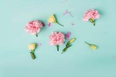 Розовые гвоздики Цветы peonies Розовые пионы на зеленой предпосылке Стоковое Изображение RF