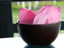 Розовые лепестки лотоса стоковая фотография