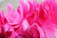 Розовые деревянные текстура и предпосылка пера цыпленка пыли Стоковое Изображение