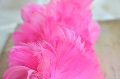 Розовые деревянные текстура и предпосылка пера цыпленка пыли Стоковые Фото