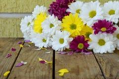 Розовые, желтые и белые цветки стоцвета День ` s дня рождения, матери, ` s валентинки карточка дня, 8-ое марта, свадьбы или пригл Стоковое Фото