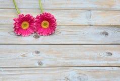 Розовые желтые маргаритки gerbera на серой старой деревянной предпосылке полок с пустым космосом экземпляра Стоковые Изображения