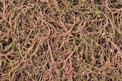 Розовые засорители Стоковое фото RF