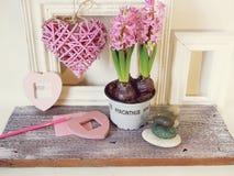 Розовые зацветая гиацинты в баке, оформлении сердца, рамках на светлой предпосылке стоковые изображения