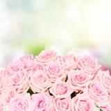 Розовые зацветая розы Стоковые Фото