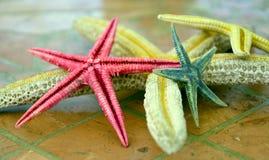 Розовые зеленые звезды Желтого моря в романтичных оттенках конец вверх Стоковое Изображение RF