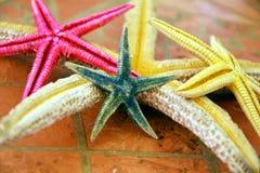 Розовые зеленые звезды Желтого моря в серых оттенках конец вверх Стоковое фото RF