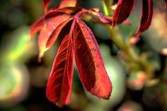 Розовые лист Стоковые Фотографии RF