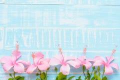 Розовые и белые цветки на пастельной яркой голубой деревянной предпосылке Стоковые Фото