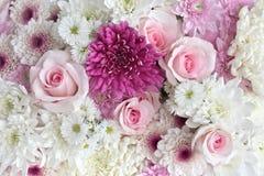 Розовые и белые цветки Стоковая Фотография