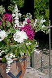 Розовые и белые розы пиона Стоковое Фото