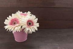 Розовые и белые цветки gerbera в цветочном горшке, на древесине Стоковые Изображения RF