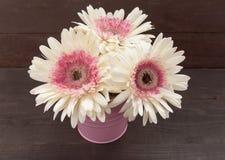 Розовые и белые цветки gerbera в цветочном горшке, на древесине Стоковое Изображение