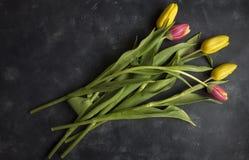 Розовые и желтые тюльпаны стоковое изображение