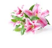Розовые лилии Стоковое Изображение