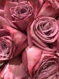 Розовые и яркие розы стоковое фото rf