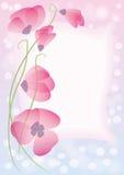 Розовые маки Стоковое фото RF