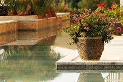 Розовые малые цветки в каменной вазе Стоковые Фото