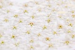 Розовые малые цветки на воде желтый цвет картины сердца цветков падения бабочки флористический Свадьба, предпосылка весны Стоковые Фото