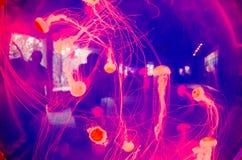 Розовые медузы стоковые изображения