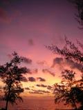 Розовые небеса в Вьетнаме Стоковая Фотография RF