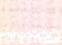 Розовые обои или предпосылка цветения Сакуры Стоковые Изображения RF