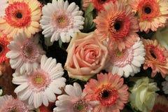 Розовые оранжевые розы и gerbers Стоковая Фотография
