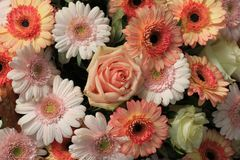 Розовые оранжевые розы и gerbers Стоковые Изображения RF