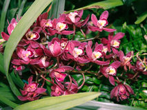 Розовые орхидеи Стоковое Фото