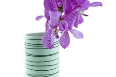Розовые орхидеи mokara в вазе изолированной на белой предпосылке Стоковая Фотография