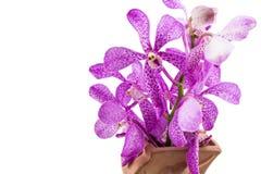 Розовые орхидеи mokara в вазе изолированной на белой предпосылке Стоковое фото RF