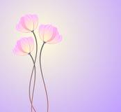 розовые первоцветы Стоковое Изображение RF