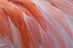 Розовые пер фламинго закрывают вверх стоковая фотография rf