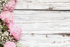 Розовые пионы и цветки дыхания младенцев над белой деревянной предпосылкой стоковые изображения