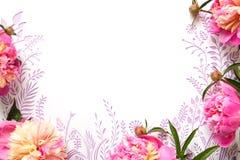 Розовые пионы на белой предпосылке отрезали от бумаги Стоковые Изображения RF
