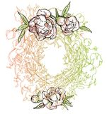 Розовые пионы также вектор иллюстрации притяжки corel Стоковая Фотография RF