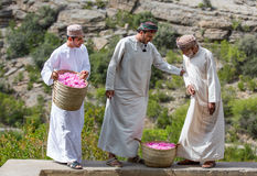 Розовые подборщики Стоковое Фото