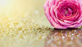 Розовые предпосылка поздравительной открытки цветка или идея знамени сети Стоковое Изображение