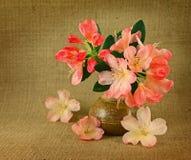 розовые рододендроны Стоковые Фото