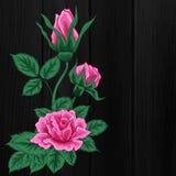 розовые розы Дизайн моды Печать вектора флористическая Стоковое Изображение RF