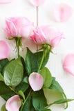 Розовые розы и листья на покрашенной древесине Стоковое Изображение