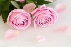 Розовые розы и листья Стоковые Изображения