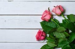 Розовые розы на белой деревянной предпосылке, открытом космосе для вашего tex Стоковые Фото