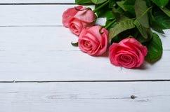 Розовые розы на белой деревянной предпосылке, открытом космосе для вашего tex Стоковое Фото